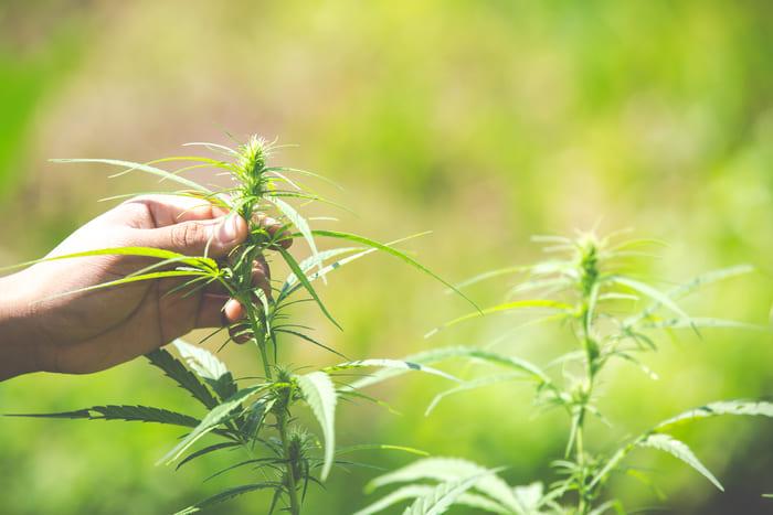 huile de cannabis effet acheter prix